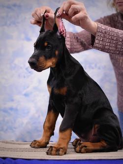 Banzai, 2 months