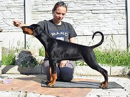 Santa Julf Adelina Eria Pro Iskander доберман адамант спирит купить щенка