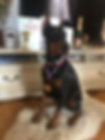 доберман адамант спирит купить щенка