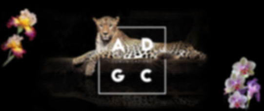 leopard OK.jpg