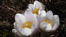 Les Elixirs Floraux & le Soin