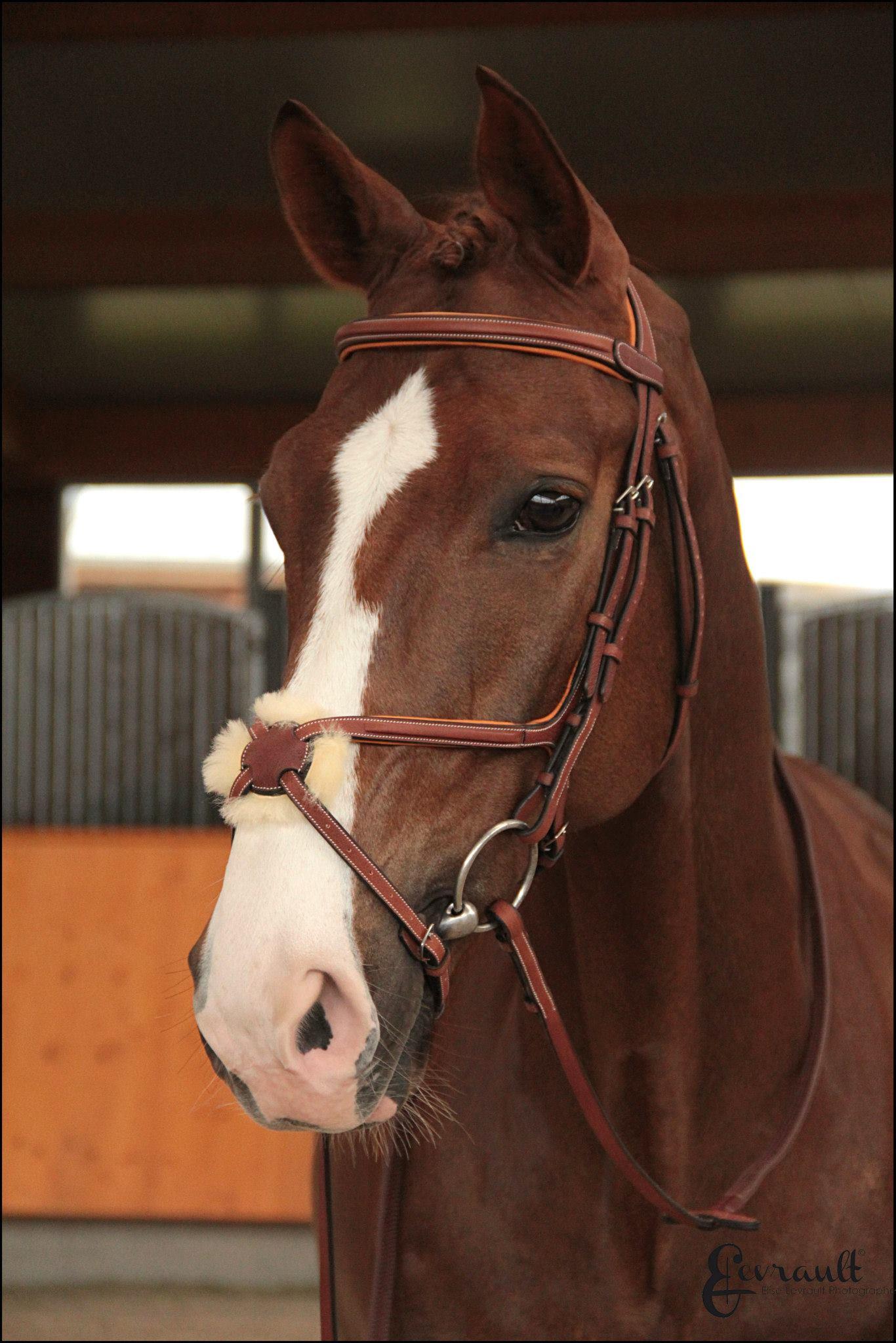 Maddox Equestrian Butet Saddles