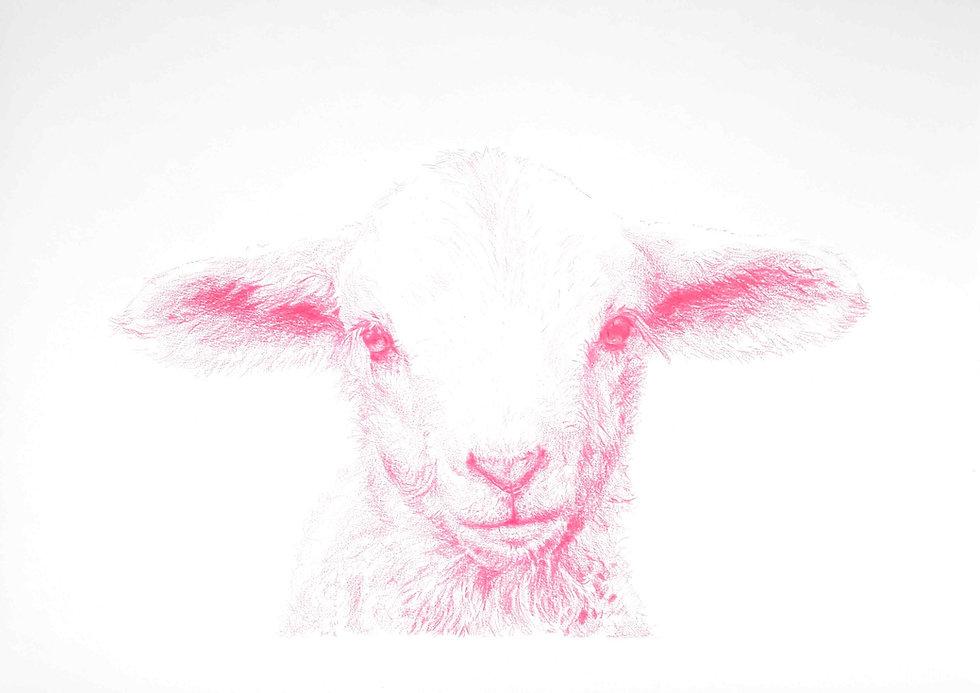 Le-mouton_edited.jpg
