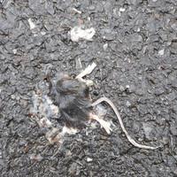 Fin de la petite souris