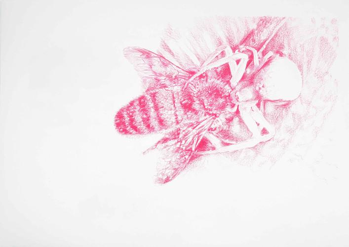 L'araignee.jpg