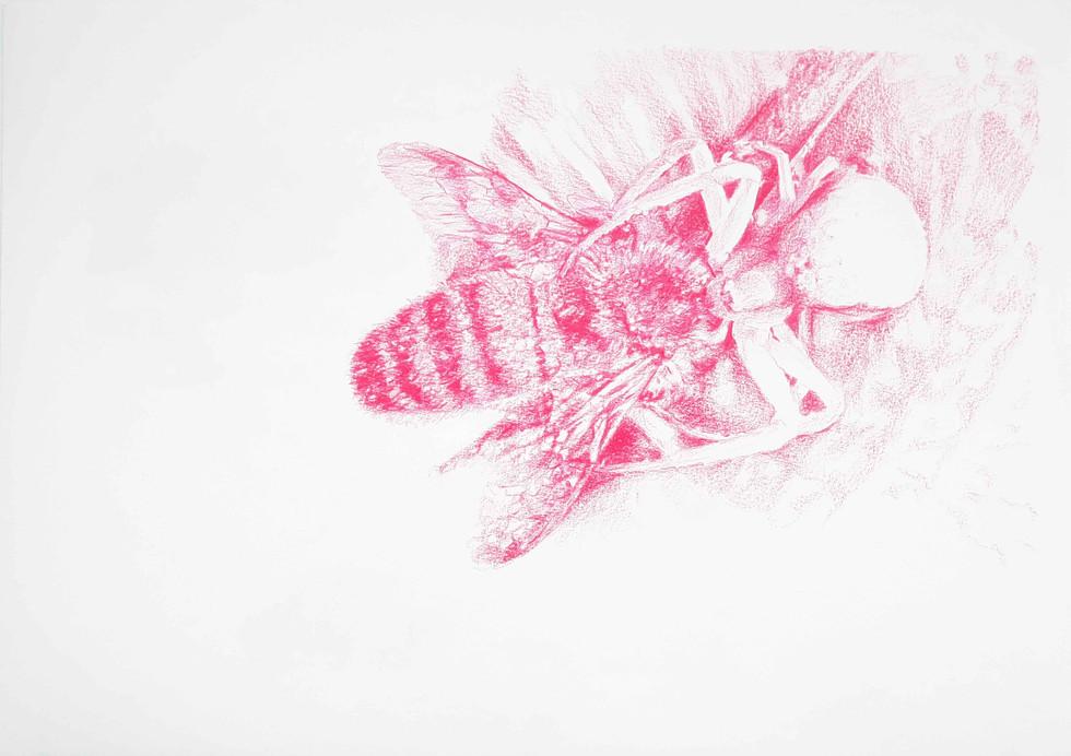 L'abeille et l'araignée / 30 03 2020