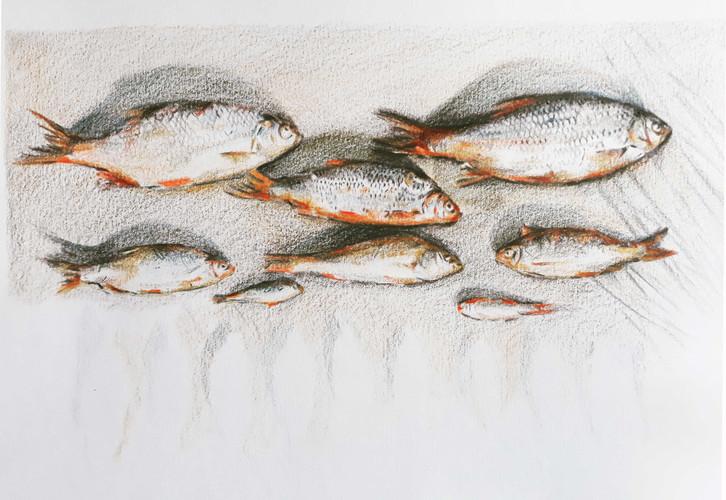 la pêche à la ligne
