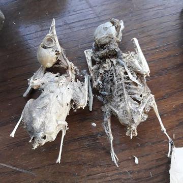 J'ai retrouvé mes oiseaux