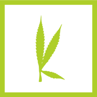 kannibox monthly cannabis subscription