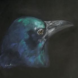 Raven VI
