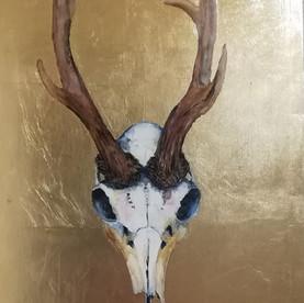 Capreolus capreolus (Roe deer buck)
