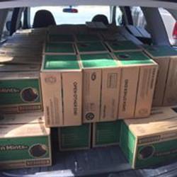 Car full of Thin Mintsq