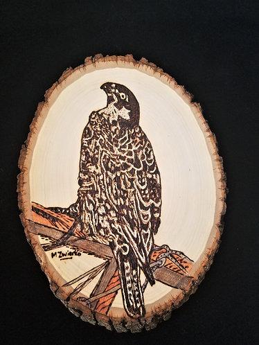 "Pyrography Artwork ""Falcon"" 10 x 8 in."