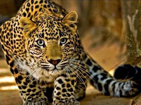 Découverte de la région du Pantanal