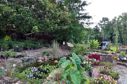 Front-of-nursery-with-plants.jpg