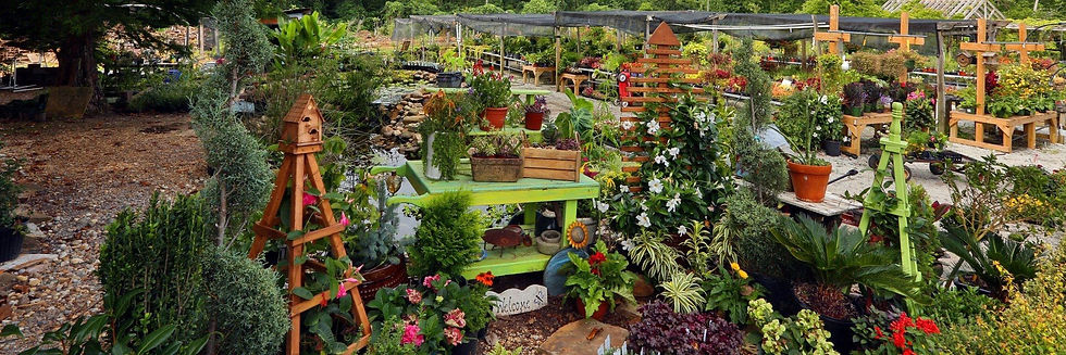 Interior-plants-on-display.jpg