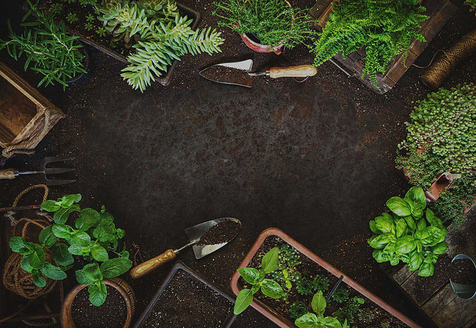 Gardening-background-with-dirt-and-plant