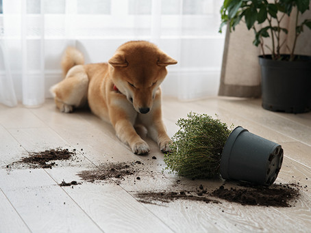 Plants That Are Safe For Pets And Small Children