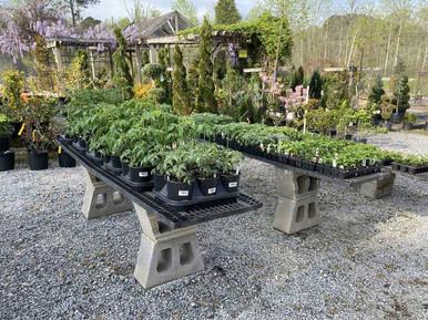 Plants-on-lot.jpg