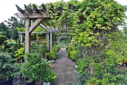 Pergola-with-plants-surrounding.jpg