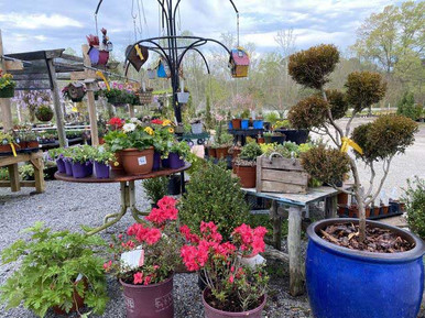 Plants-and-containers.jpg