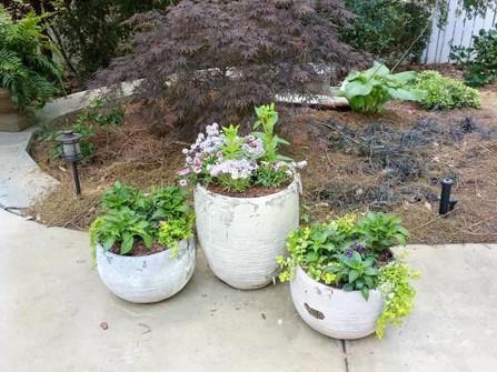 Three potted plants.jpg
