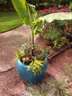 Potted container.jpg