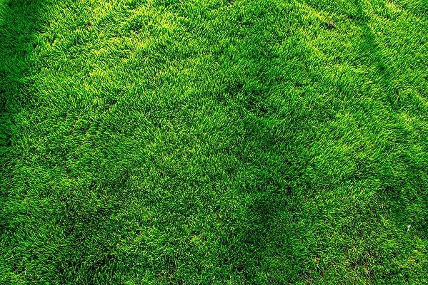 beautiful-green-lawn-NWV7XMY.jpg