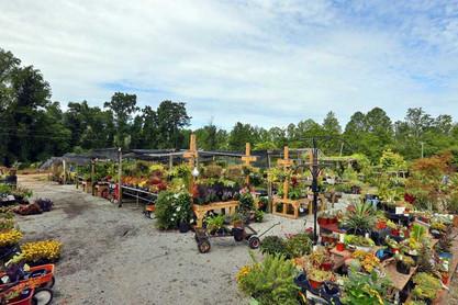 Large-lot-of-plants.jpg
