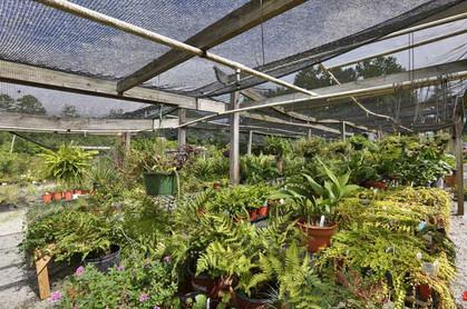 Array-of-plants.jpg
