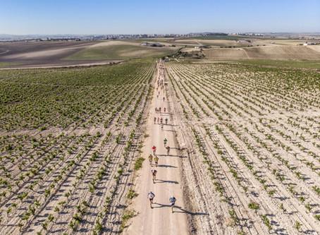 Ambiente festivo en la tercera edición de Sherry Maratón
