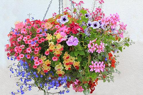 Summer Hanging Basket (pre order)