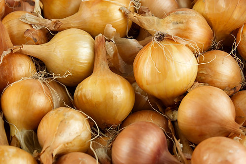 Onion Plants x 8