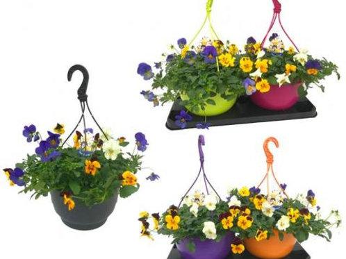 Winter Viola Hanging Basket