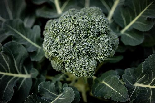 Broccoli Plants x 8