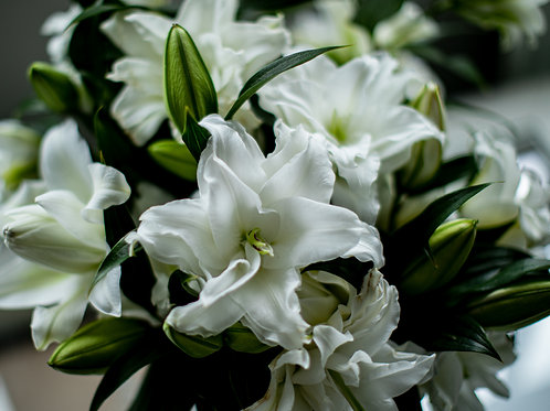 Double Rose Lillies