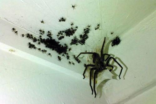 Sneaky Spiders?