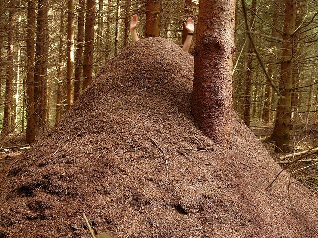 Abundant Ants?