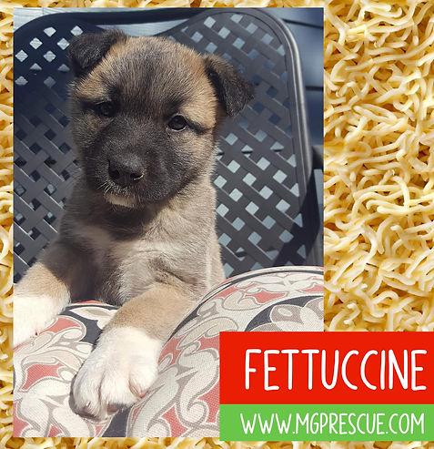 Fettuccine.jpg