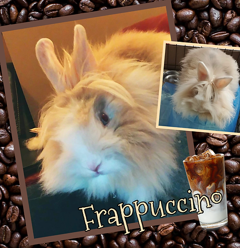 Frappuccino.png