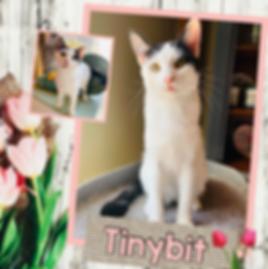 Tinybit.png