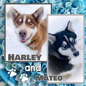 Harley and Mateo.jpg