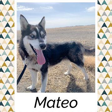 Mateo.jpg