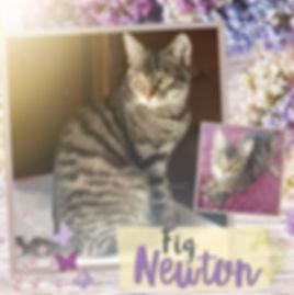 Fig Newton.jpg