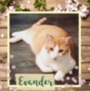Evander.png