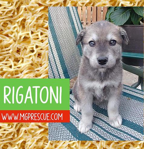 Rigatoni.jpg