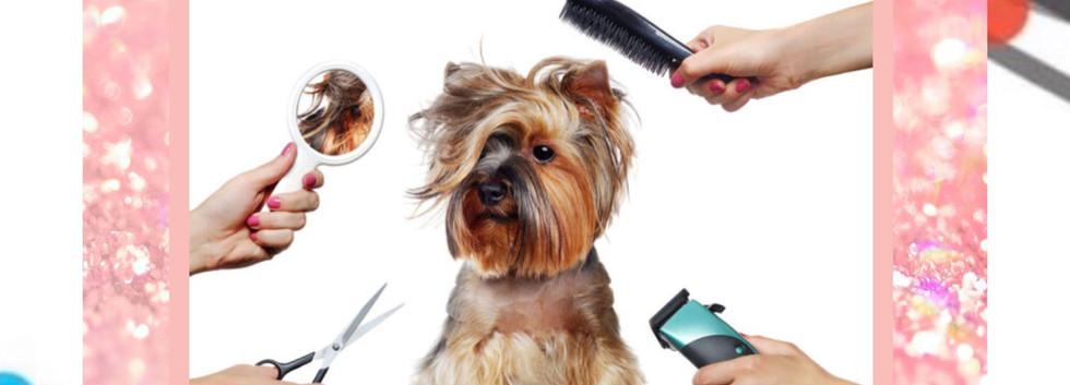 Pet Planet grooming.jpg