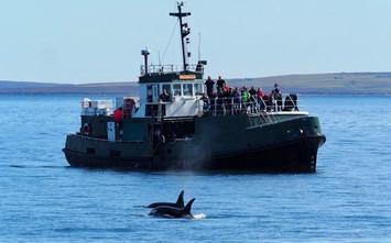 Scapa-Boat-4.jpg