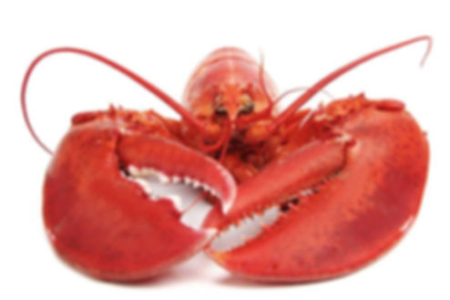 Lobster Logo.jpg