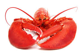 LobsterClaws